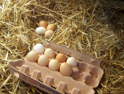 Free range eggs by wikimediacommons